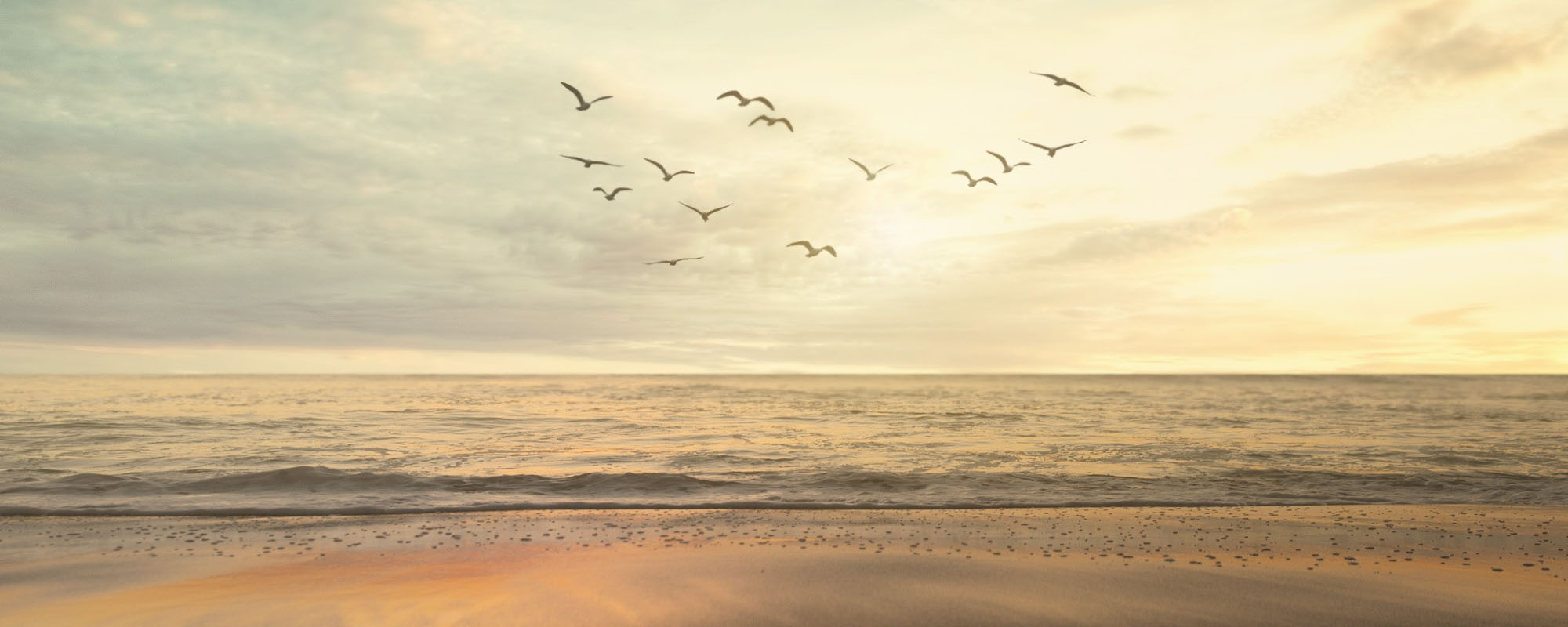 Birds flying over the ocean